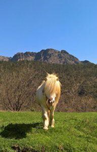 """Un Pony della fattoria de """"la Grilla"""""""