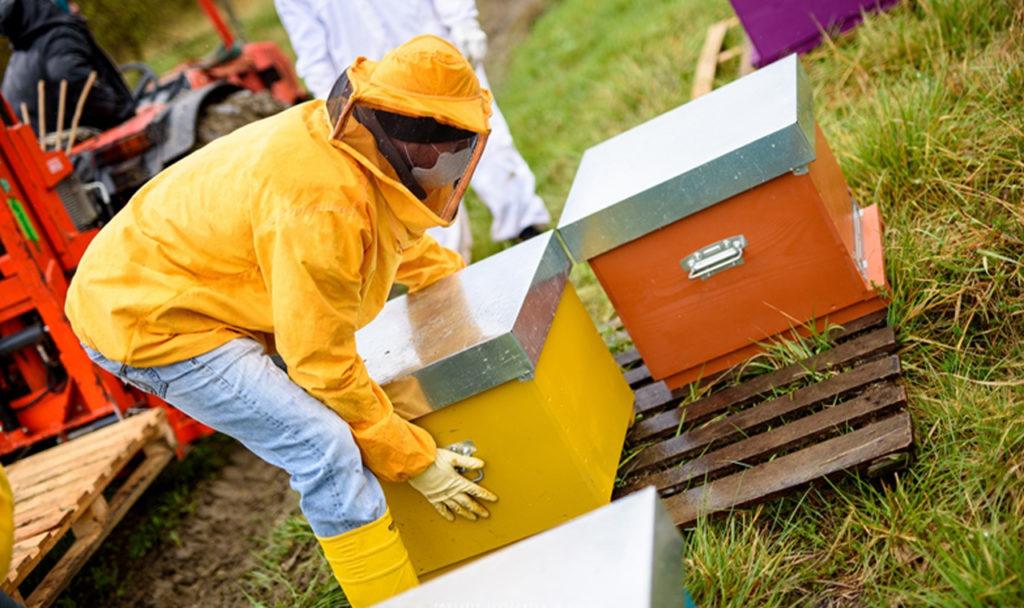 strumenti finanziari a sostegno dell'apicoltura-castel del giudice isernia